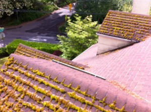 Revive your composition roof by cleaning with our low pressure washing or hand scraping.